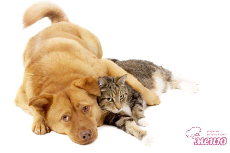 Пища кошек и собак
